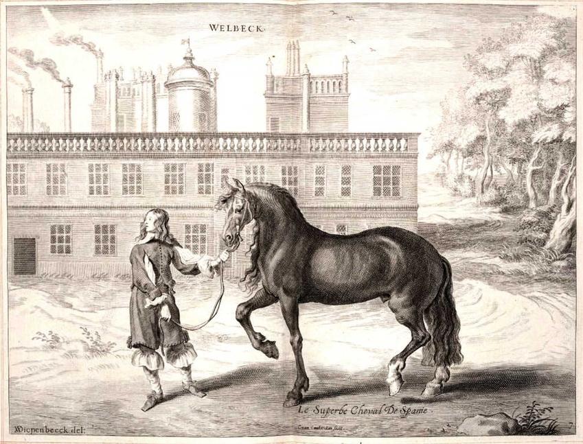 Koń andaluzyjski, podobny do koni husarskich, a także ich rasy, ceny oraz trening w wojsku