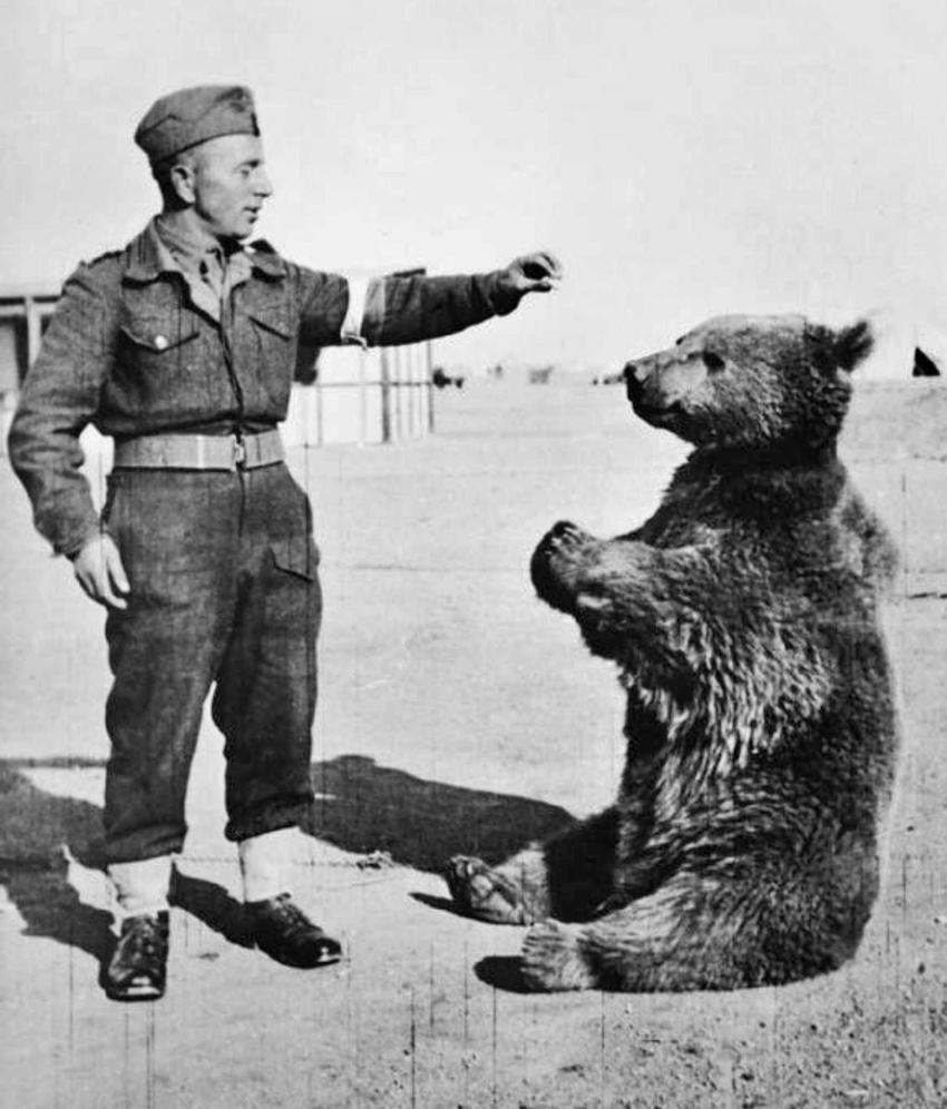 Miś Wojtek, najciekawszy polski żołnierz w czasie II wojny światowej i jego historia, losy powojenne, daty