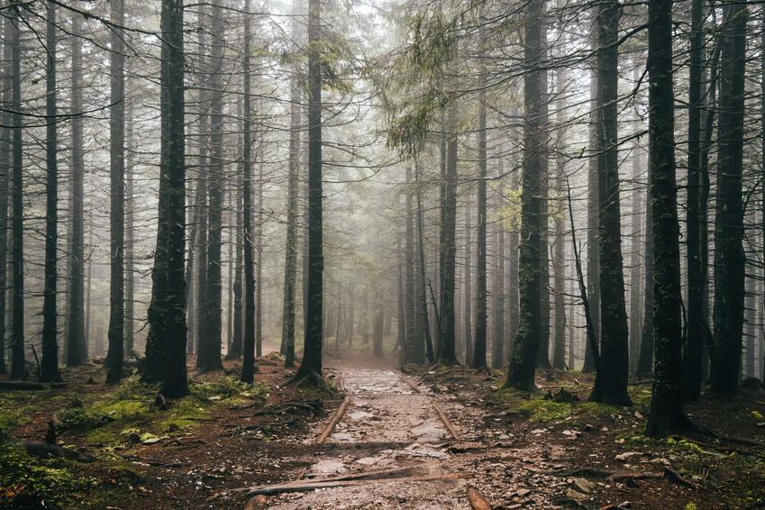 Las spowity mgłą, a także Lasy Tatrzańskie i ich historia, czyli wycinka i sadzienie na przestrzeni lat