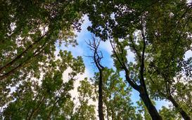 Blair Witch Project w Polsce, czyli nawiedzony las w Witkowicach