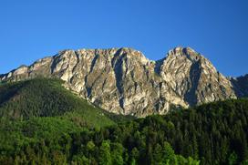 Pod koniec XIX wieku w Tatrach praktycznie wszystkie lasy były wycięte – jak je odtworzono?